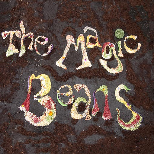 Cover Artwork for Magic Beans First Album - The Magic Beans
